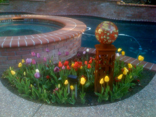 Spring tulips, beautiful and riotously colorful, just like their gardeners!