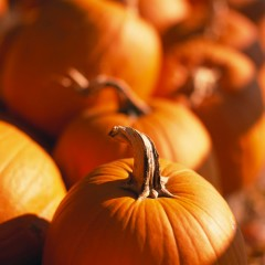 Pumpkins Gallore